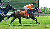 Uncle Leo winning at Delaware Park on 6/15/17