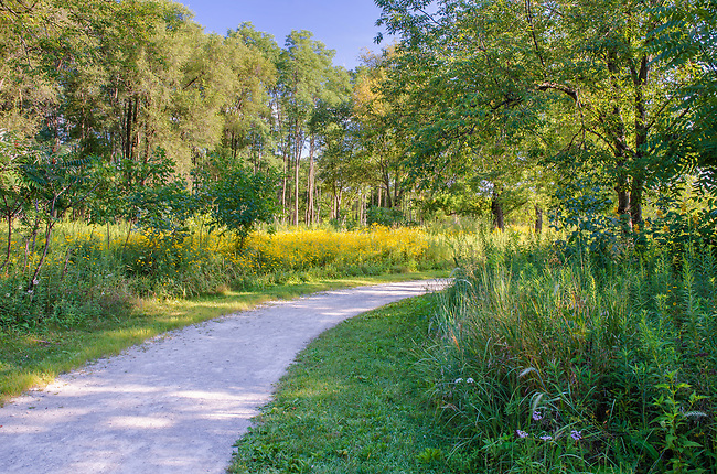 A limestone gravel trail winds through fields filled with Black-eyed Susan wildflowers at Rock Run Forest Preseerve in Will County, Illinois