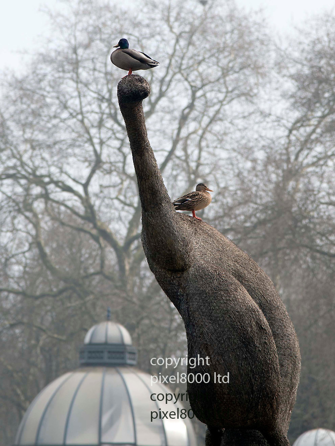 Pic shows: Duck that thinks it's a pigeon.<br /> <br /> Duck seen standing on a sculpture in Victoria Park Lake in Hackney East London.<br /> <br /> 20 foot high Ernö Bartha sculpture of a bird in Victoria Park lake has become look out for this brave duck. <br /> <br /> But other ducks don't seem to like it because as soon as it came into land another duck attacked it.<br /> <br /> <br /> <br /> <br /> picture by Gavin Rodgers/ Pixel