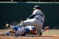 Brian Carroll #24 of the UCLA Bruins is tagged out at the plate by Andrew Knapp #5 of the California Golden Bears at Jackie Robinson Stadium on March 23, 2013 in Los Angeles, California. (Larry Goren/Four Seam Images)