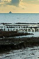 France, Ille-et-Vilaine (35), Cancale, Les Parcs à Huîtres  et en fond le Mont Saint Michel //France, Ille et Vilaine, Cancale, Oyster farm : Cancale oysters, local oysters and  Mont Saint Michel  in the back