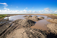 Potato soil heaps in flooded field corner - Lincolnshire, February