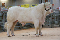 Charolais Cattle Society Welshpool Feb 2017