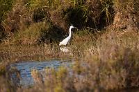 Europe/France/13/Bouches du Rhone/Camargue/Parc Naturel Régionnal de Camargue/Arles/Env de  Salin-de-Giraud: Tour du Valat