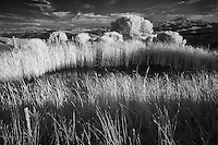 Infra Red Black & White view of pond and agricultural area, San Quirico d'Orcia, Italy, Tuscany