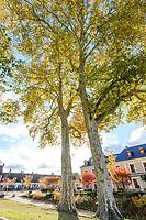France, Loire-et-Cher (41), Chambord, château de Chambord, platane commun ou platane à feuilles d'érable  en automne