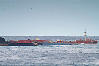 shipwreck of MS Oliva, a bulk carrier, beached on Nightingale Island due to human navigational error, Tristan da Cunha, South Atlantic Ocean, More than 800 tons of fuel oil spilled from the ship and coated some 20,000 endangered northern rockhopper penguins.