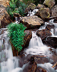 Tyndall Creek, waterfall, plants, Rocky Mountain National Park, Colorado, summer