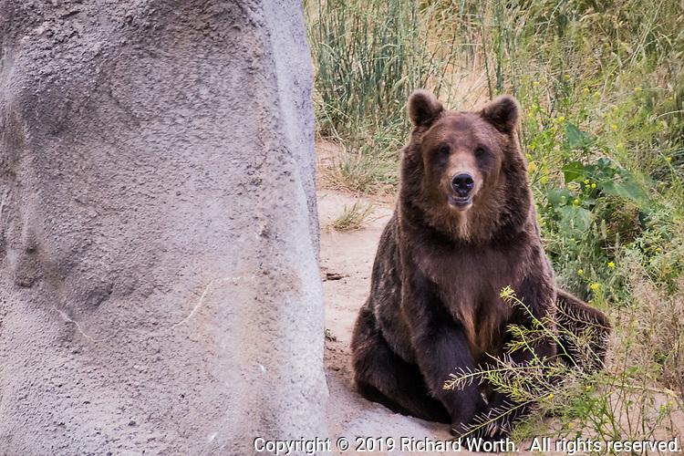 A resident of The Wildlife Sanctuary, rescued and now thriving in a natural habitat north of Denver, Colorado.