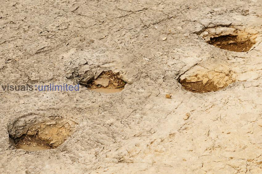 Jurassic Dinosaur footprints, Lavini di Marco, Rovereto, Alps, Italy
