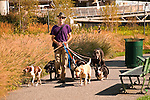 Charles River Park, man walking six dogs.