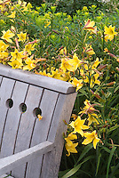 Garden bench and daylilies Lemon Bells in yellow flowers