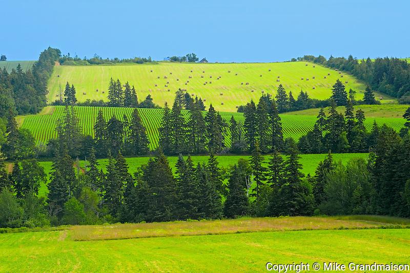 Trees in shelterbelt and farmland<br /> Brookfield<br /> Prince Edward Island<br /> Canada