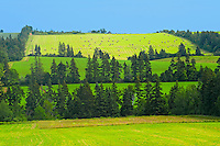Trees in shelterbelt and farmland<br /> Brookfield<br /> Prince Edward Island<br /> Canada