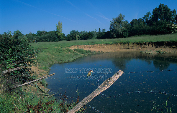 European Bee-eater, Merops apiaster, adult on fence by nesting site, Fretterans, France, May 1999