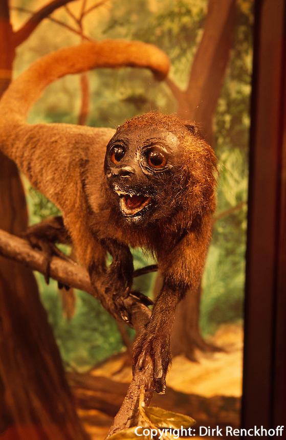 Norwegen, Oslo, Zoologisches Museum, erster Primat IDA.