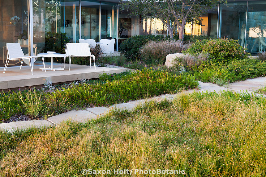 Modern Courtyard With California Native Plant Garden With Carex Pansa Lawn  (Pacific Dune Sedge)