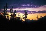 evergreen pine trees silhouette against orange yellow and purple evening sky at dusk in Glacier National Park Montana USA