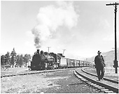 D&amp;RGW K-37 leaving Chama with a westbound stock train, near NM 17 highway crossing.  Man walking in leg of wye.<br /> D&amp;RGW  Chama, NM  ca. 1950