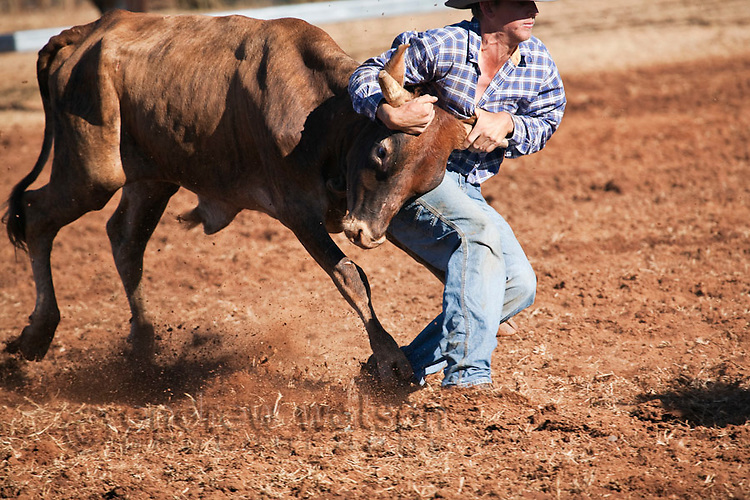 Steer wrestling (also known as bulldogging) competition at Chillagoe Rodeo.  Chillagoe, Queensland, Australia