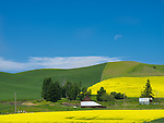 Whitman County, WA      <br /> Barn and sheds beneath the green and yellow patterned hillsides near Steptoe