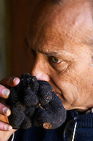 Hugues Martin, the owner of the truffles farm holding a gigantic fresh black Perigord truffle in his hand, weighing around 700 grams Truffiere de la Bergerie (Truffière) truffles farm Ste Foy de Longas Dordogne France