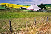 Barn and canola flowers spilling over hillside in Palouse region of eastern Washington.