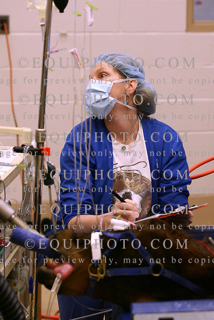 An anesthesia technician checks the EKG of a thoroughbred yearling under general anesthesia during surgery at the New Jersey Equine Clinic in Millstone Township, N.J.  Photo By Bill Denver/EQUI-PHOTO.