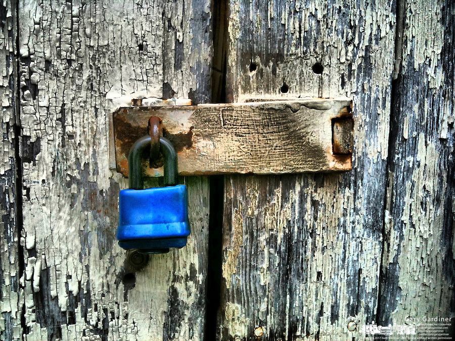 Rusting hasp with blue lock on very weathered  paint peeling from an outbuilding.