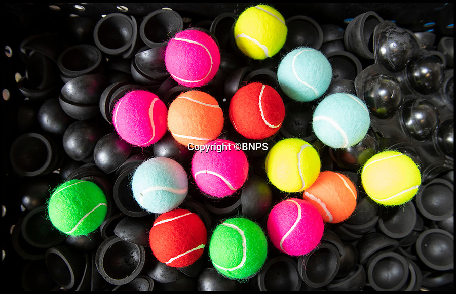BNPS.co.uk (01202 558833)<br /> Pic: PhilYeomans/BNPS<br /> <br /> The balls are available in any colour the customer wants.<br /> <br /> Smashed it - The last tennis ball maker in the Western world is bouncing back...<br /> <br /> Louise Price of tennis ball maker Price of Bath is leading the family business's fight back against far eastern competition than nearly wiped out the company a few decades ago.<br /> <br /> And the company is now doing so well again that it will soon be moving to brand new larger factory in Box in Wiltshire.<br /> <br /> Price of Bath was set up by her grandfather Joseph in the 1930's and after WW2 employed 120 people churning out 84,000 balls a week - nowadays it's the last tennis ball maker in the western world, and produces a much more modest 6000 balls a week from raw rubber from Malaysia to finished product.<br /> <br /> Louise's father Derek, who invented the rubber tiles used on nuclear powered submarines as well as running the family business, still works full time in the dickensian factory at the age of 88.