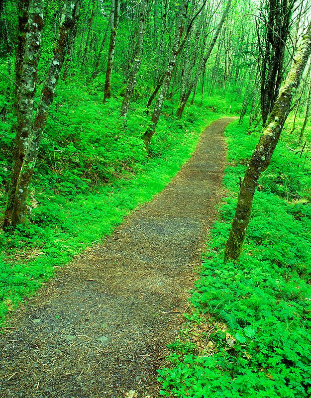 M00172M.tiff   Path with spring growth. Columbia River Gorge National Scenic Area. Oregon