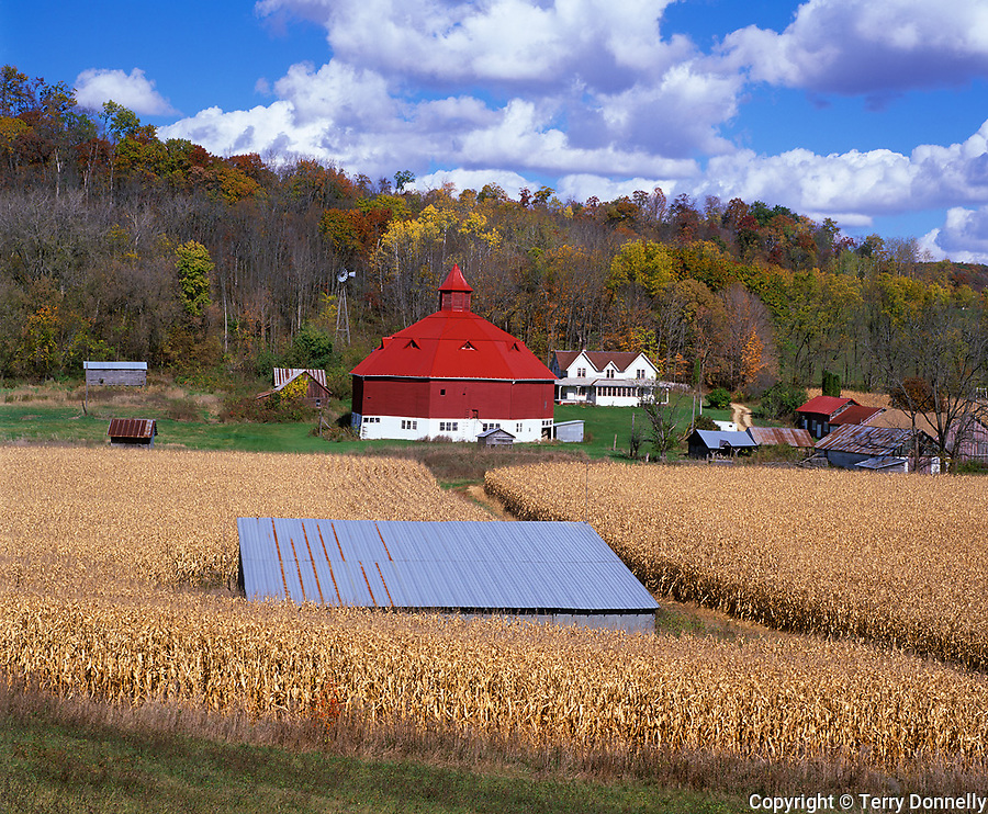 Pepin County, WI<br /> Ripe cornfields with octagonal red and white barn and farmhouse nestled in a forested valley