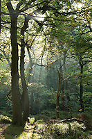 Woodland Landscapes