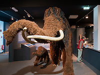 Wollhaarmammut, Helms-Museum = Arch&auml;ologisches Museum Hamburg, Deutschland, Europa<br /> wooly mammoth, Helms-Museum = Archaeological  Museum Hamburg, Germany Europe