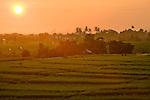 Sunset over rice fields, Canggu, Bali