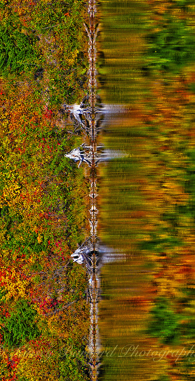 Fall colors reflected on Lion Lake flahead National Forest Montana