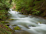 Idaho, North, Kootenai County, Coeur d'Alene National Forest. Beauty Creek flows through a vibrant green mossy area in early spring.