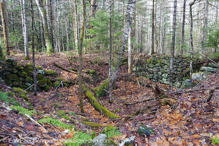 An abandoned cellar hole along an old road off Tunnel Brook Road in Benton, New Hampshire. This area was once known as Coventry, and based on an 1860 historical map of Grafton County this is believed to have been the Mulliken homestead.