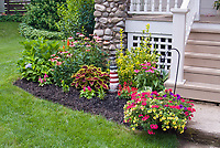 Front porch of house with hanging swing, container garden pot of calibrachoa annual flowers, verbena, coleus, Solenostemon, annuals and perennials in mulched black foundation plantings, coleus, salvia, Echinacea, hydrangea, lawn grass, shrubs, etc., nautical theme with lighthouse ornament, attracting pollinators to small garden, blooms and foliage plants, hanging basket, euonymus shrub