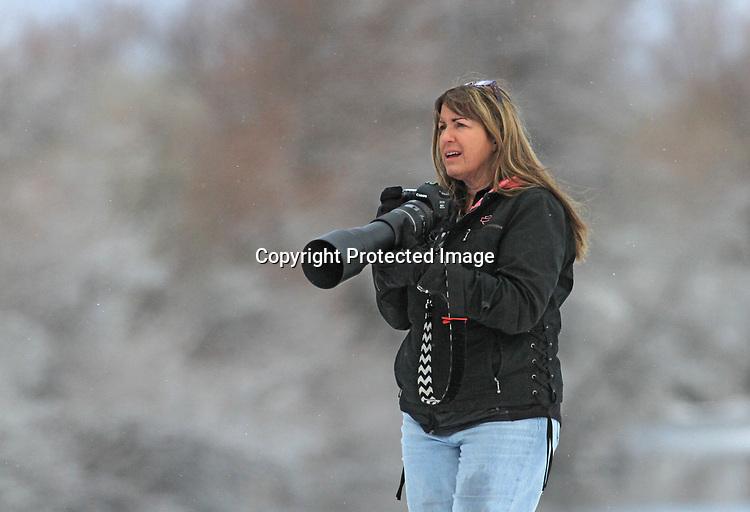Eagles found at Tulelake, CA., Lower Klamath National Wildlife Refuge.