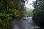 View from above rainforest waterfall