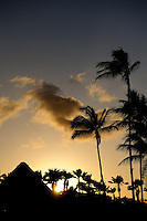 Coconut palms in silhouette at sunset. Kona, Big Island, Hawaii