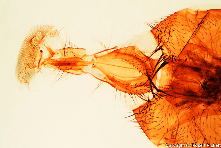 House Fly mouth parts, specialist microscopic photography.United Kingdom....