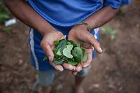 """A supporter of former Bolivian President Evo Morales, known as coca grower """"cocalero"""", shows a pile of coca leaves in a farmer's plot, in Entre Rios, Chapare province, Bolivia. November 27, 2019.<br /> Un partisan de l'ancien président bolivien Evo Morales, connu sous le nom de cultivateur de coca """"cocalero"""", montre un tas de feuilles de coca dans la parcelle d'un agriculteur, à Entre Rios, province du Chapare, Bolivie. 27 novembre 2019."""