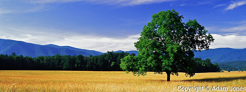 Panoramic view of single tree in meadow, Cades Cove, Great Smoky Mountains National Park, Tennessee