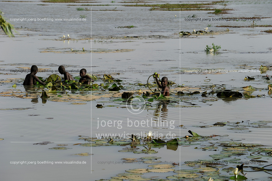 NIGER Niamey, river Niger, children collect water lily