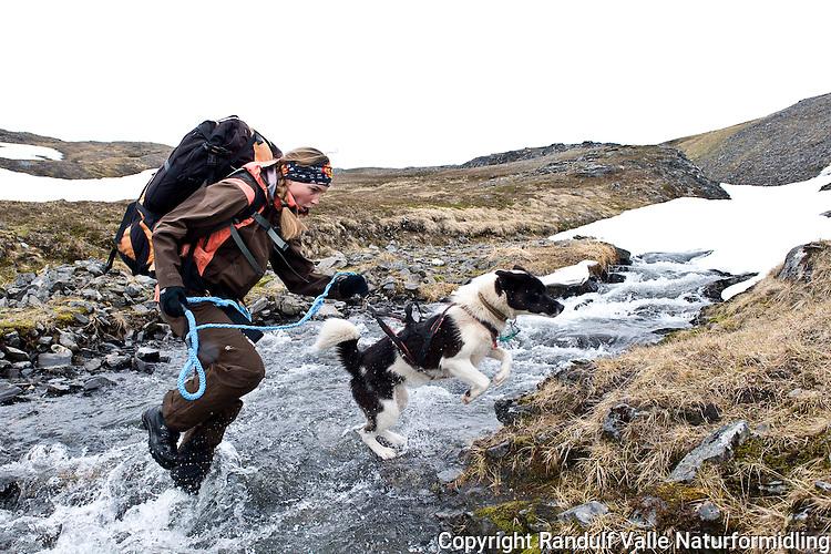 Dame og grønlandshund krysser bekk på Magerøya. ----- Woman and greenland dog crossing stream.