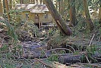Ipsut Creek Ranger Cabin in the aftermath of November, 2006 flood, Carbon River Rainforest, Mount Rainier National Park, Washington State