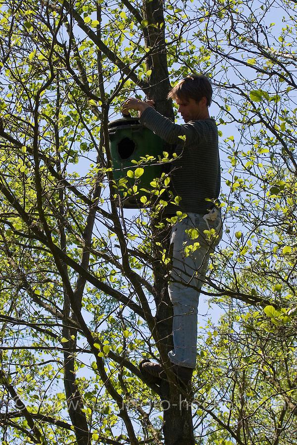 Nistkasten für Waldkauz, Eulenkasten, Kontrolle durch Vogelschützer, ehemalige Mülltonne umgebaut und hoch in Baum gehängt
