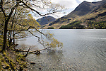Lakeside woodland, Lake Buttermere, Lake District national park, Cumbria, England, UK